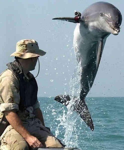 Động vật biển có thể giúp được gì cho con người trong lĩnh vực quân sự? - Ảnh 2.