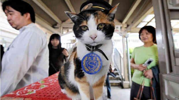 Chỉ nhờ một cô mèo hoang, công ty Nhật Bản lãi to 280 tỷ, thoát khỏi cảnh phá sản trong gang tấc