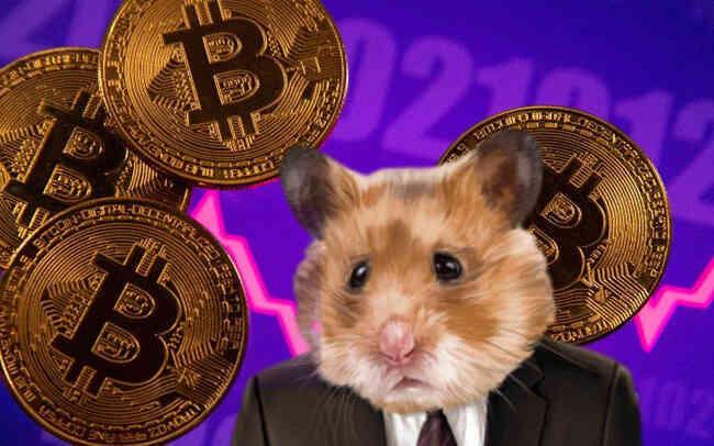Chú chuột hamster tự giao dịch tiền số, tỷ suất sinh lời đạt gần 24% kể từ tháng 6