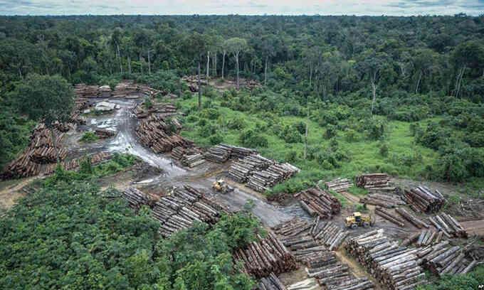 Rừng Amazon ở Brazil bị chặt phá nhiều nhất trong 12 năm