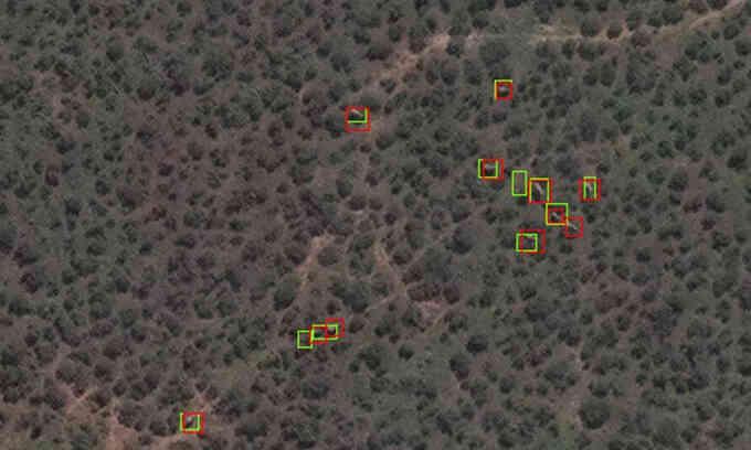 Phương pháp đếm voi mới bằng vệ tinh