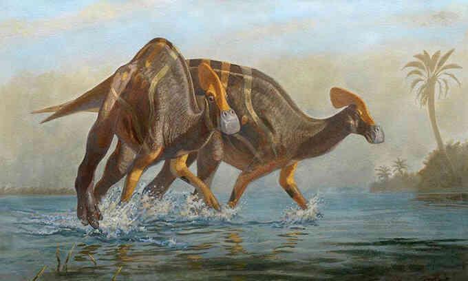 Phát hiện khủng long mỏ vịt có mào khổng lồ