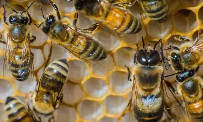 """Ngỡ ngàng hai con ong cùng """"hợp tác"""" mở nắp chai nước ngọt"""
