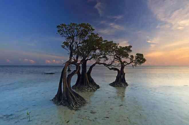 """Rừng cây """"nhảy múa"""" độc đáo ở Indonesia có thực sự chuyển động?"""